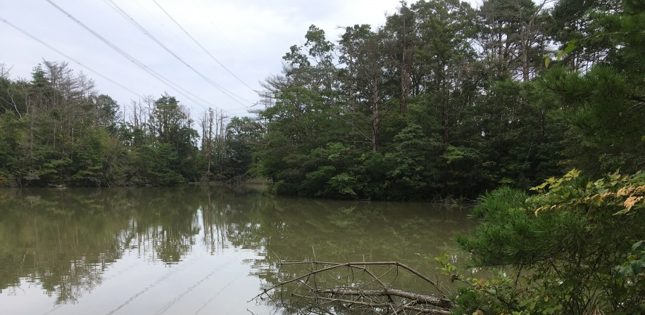 Fieldwork at Inkyozaka pond in Fukushima