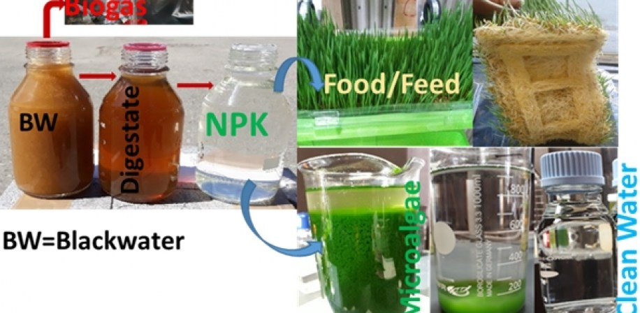 Treatment of source-separated blackwater for resource recovery