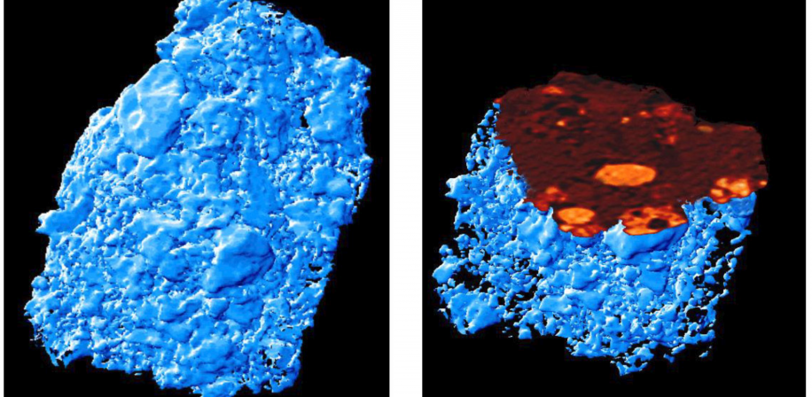 μ-XAS-tomography of an oxidised fuel particle released during the fire in the Chernobyl reactor (Salbu et al., 2000). (Left) 3-D rendering of tomographic slices showing the surface of the particle. (Right) Computerised slicing of the 3-D image of the oxidised fuel particle.