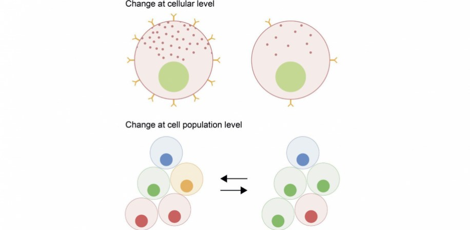 Modes of cellular plasticity