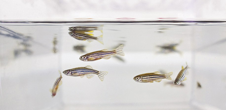 The Norwegian Zebrafish platform